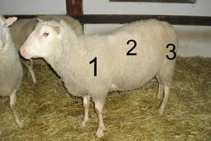 Places for taking the wool samples and grading of the wool: 1, 2 and 3